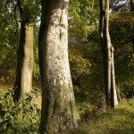 Autumn Vignettes - Brookside Printworks, Oswaldtwistle