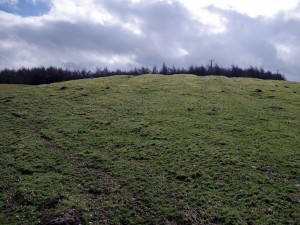 Bracken Hill, Wycoller (6)