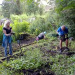 Clearing the Kitchen Garden - Day 1