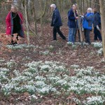 Gardening Group - Snowdrop Trip to Lytham Hall