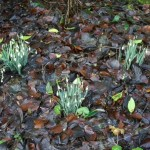 Pendle Heritage Garden group - Wed. 25th February