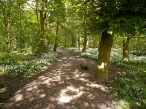 Spring Wood Whalley 2015 May (1)