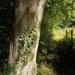 Garden & Woodland August (1)