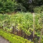 Garden & Woodland August (7)