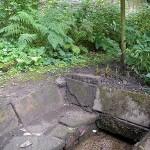 Garden & Woodland August (8)