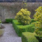Garden Winter (5)
