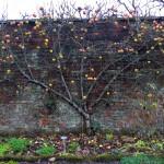 Garden Winter (7)