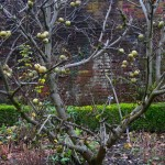 Garden Winter (8)