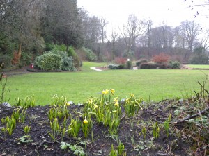 The srping bulbs planted at a recent session are coming through.